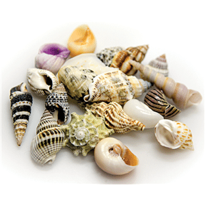 Hobby Snail / Crab Shell Set Large Shells 5pcs