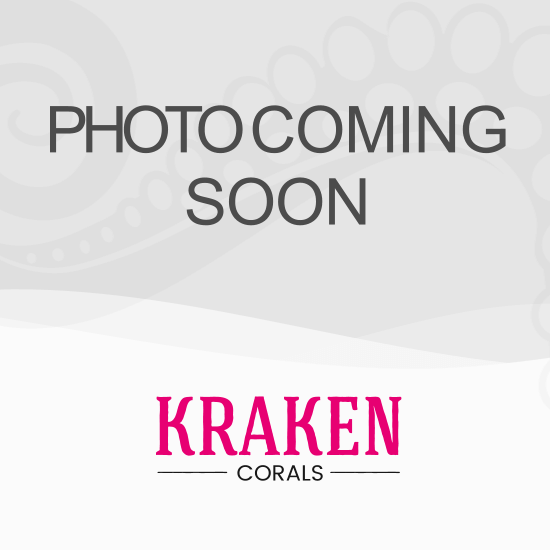 Red Sea Reefer XL 525 Deluxe Aquarium