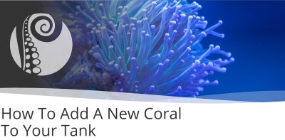 How To Add A New Coral To Your Tank