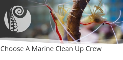 How To Choose A Marine Clean Up Crew