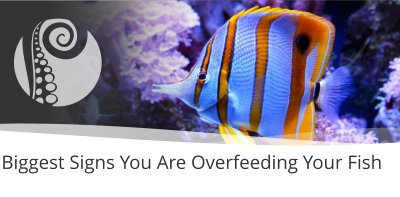 Biggest Signs You Are Overfeeding Your Fish