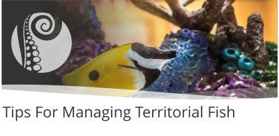 Tips For Managing Territorial Fish