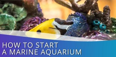 How To Start A Marine Aquarium