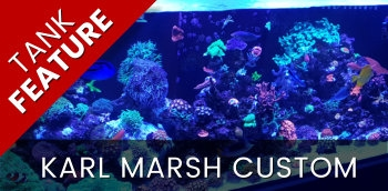 Featured Marine Aquarium: Karl Marsh
