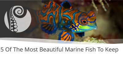 5 Of The Most Beautiful Marine Fish To Keep