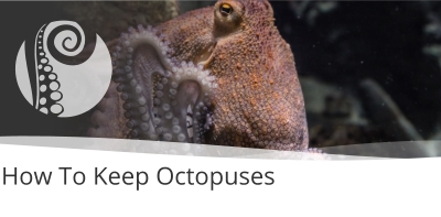 How To Keep Octopuses