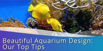 Beautiful Aquarium Design: Our Top Tips