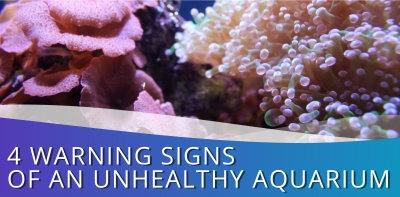 4 Warning Signs of an Unhealthy Aquarium